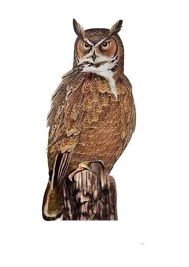 Beautiful Bird - painting, illustration - marfandosart | ello