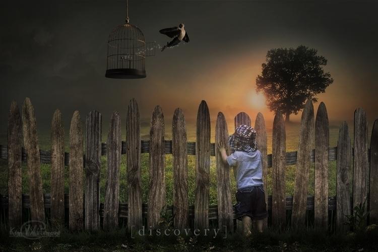 Discovery - bird, flying - kimwhit-2847 | ello
