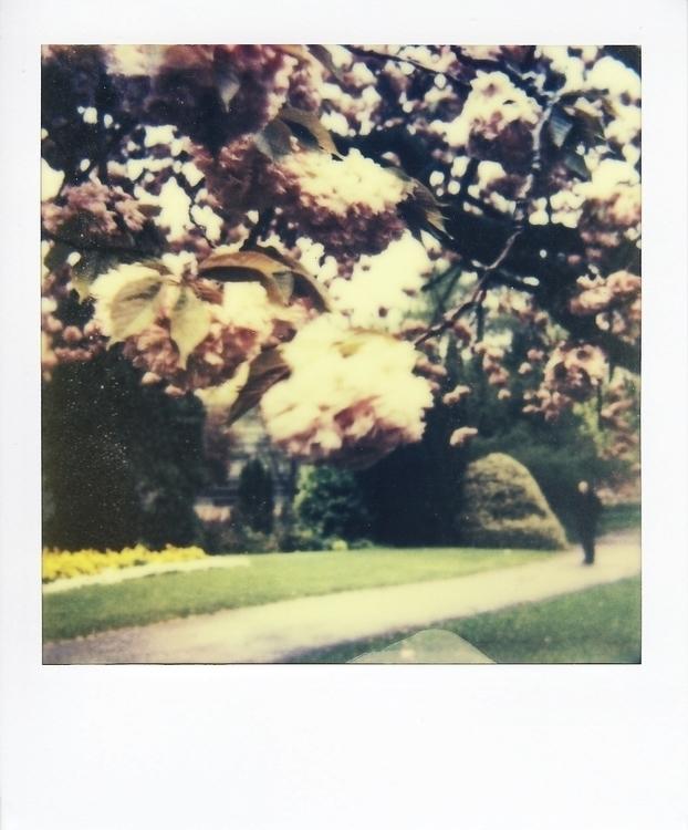 photography, polaroid, blossoms - juliahs-1141 | ello