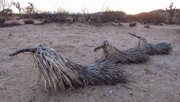 Desert Narwhals - thyrza-9951 | ello