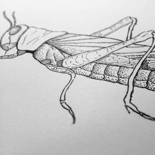 'Jorge' Sketchbook drawing - illustration - yana_c | ello