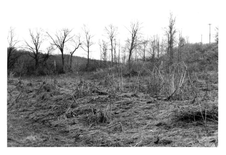 Crushed - photography, film, blackanwhite - devon_kelly | ello