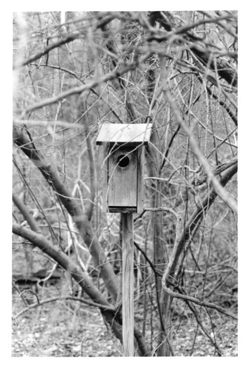 Shrouded - photography, film, blackandwhite - devon_kelly | ello