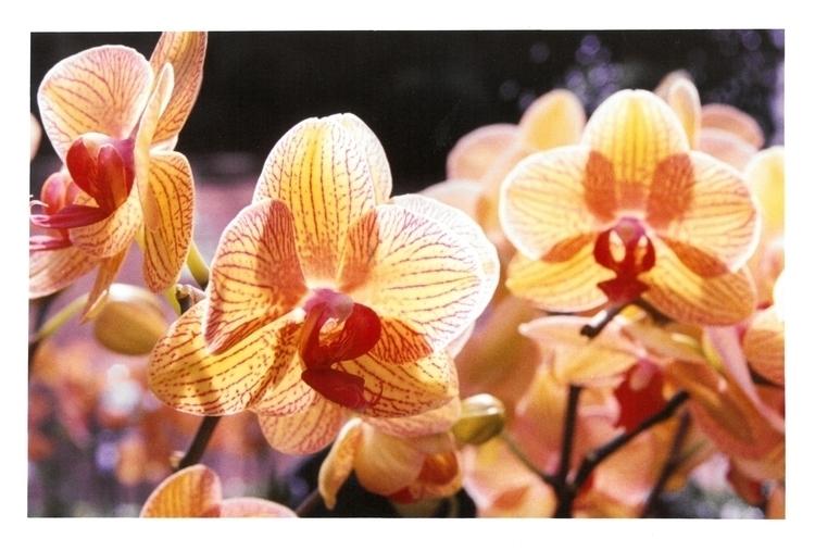 Orchids Color film class; Longw - devon_kelly   ello