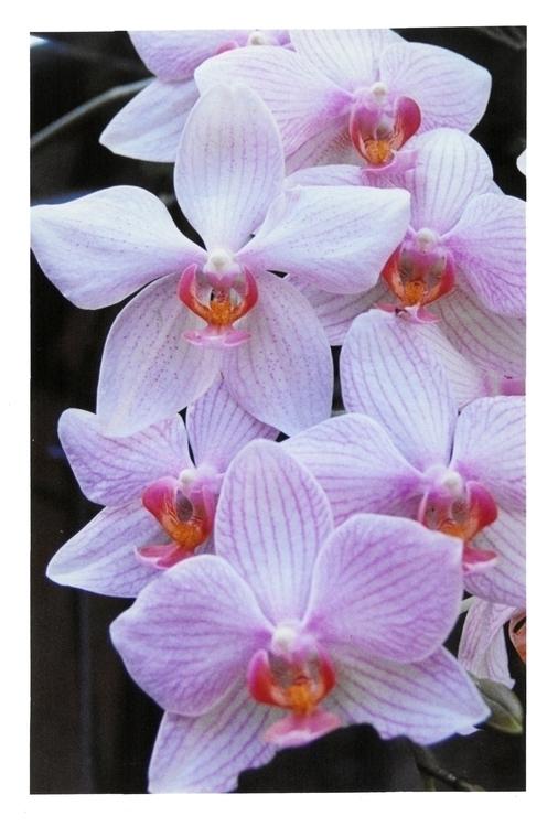 Orchids Color film class; Longw - devon_kelly | ello