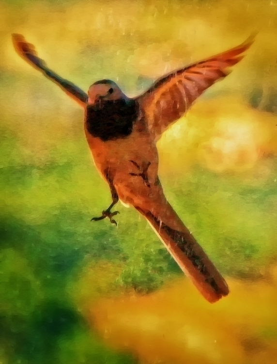 4, photography, digitalart, birds - pierocefaloni | ello