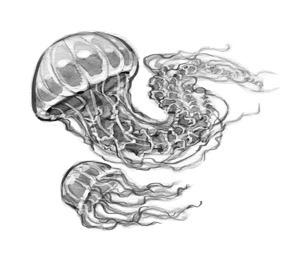 Jellyfish - jellyfish, blackandwhite - jessicawarrick | ello