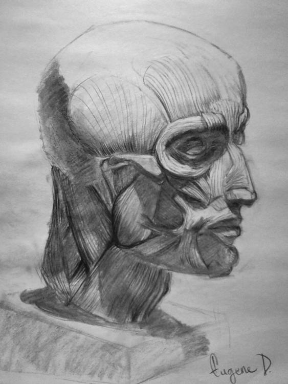 Muscle Head: Bust study pencil  - grimapple | ello