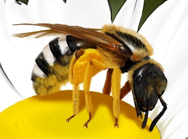 Detail bee. Scientific illustra - marcmontenegro | ello
