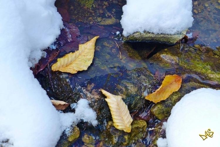 Adirondack Beech - photography, printoncanvas - dalespiry | ello