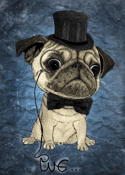 Pug; Gentle Pug. Illustration B - barruf | ello