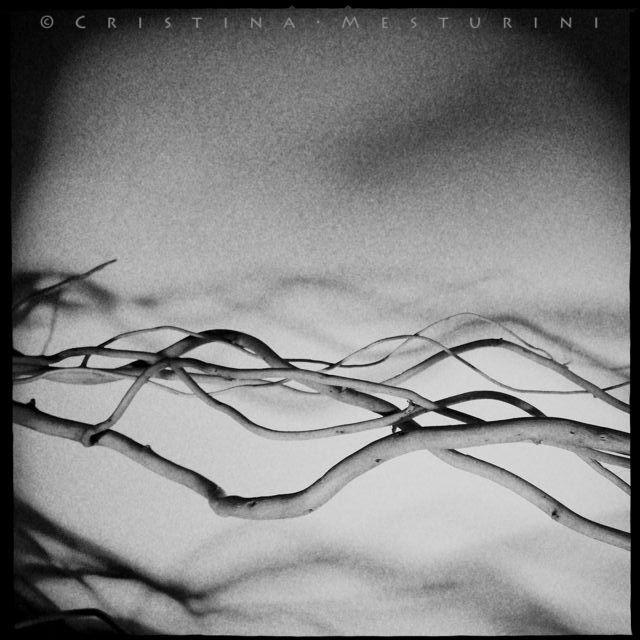 Cristina Mesturini 2015 - photography - criblue-7801 | ello