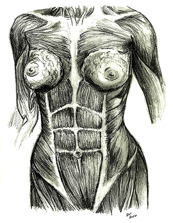 Muscle Woman Life Drawing Penci - wilkinso-5391 | ello