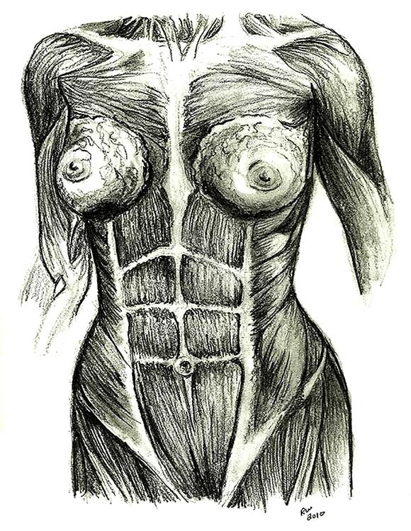 Muscle Woman Life Drawing Penci - wilkinso-5391 | ello