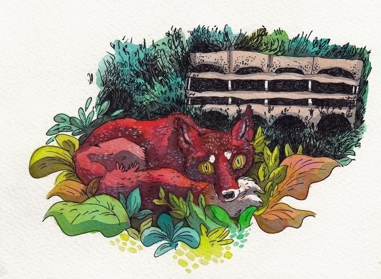 fox, illustration, traditionalart - jkirkham | ello
