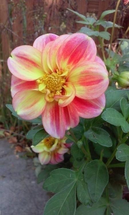 Flower Cleveland Botanical Gard - angelasabetto   ello