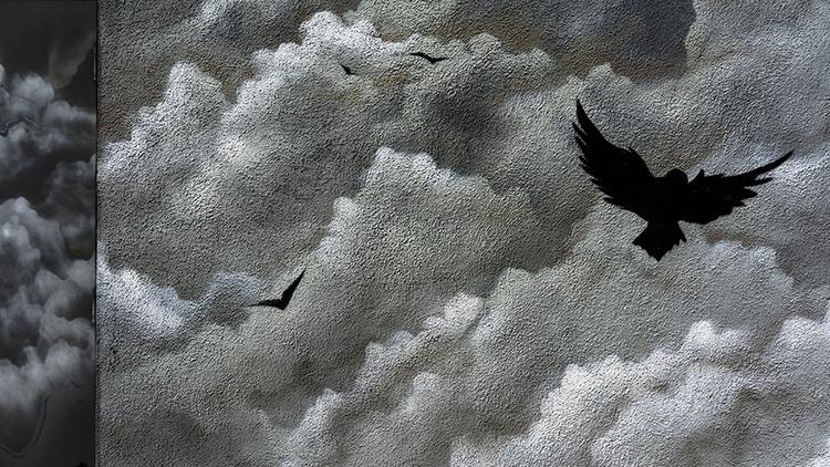 black birds Pasadena, Californi - frankfosterphotography | ello