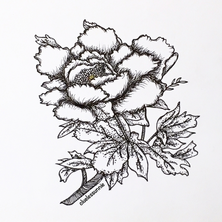 Peony - illustration, drawing, conceptart - hanvone | ello