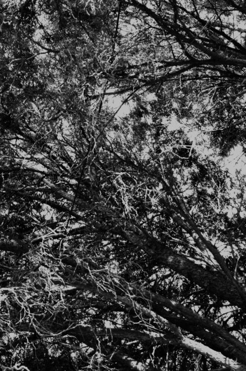 series: trees lines - conceptart - annieannie-9187 | ello