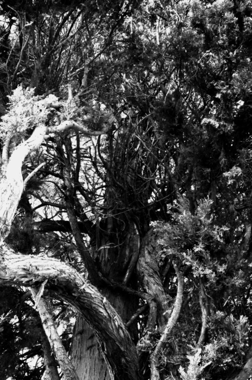 series: trees lines - #photography - annieannie-9187   ello