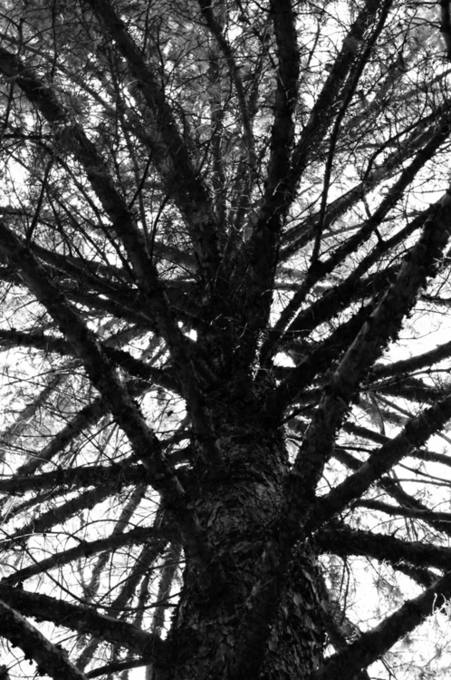 series: trees lines - photography - annieannie-9187 | ello
