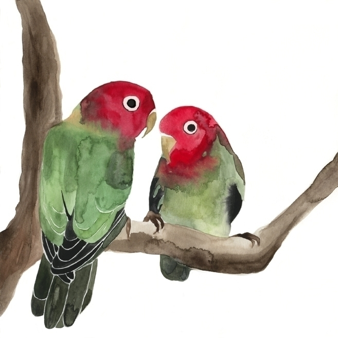 lovebirds, love, bird, parrot - robincottage | ello