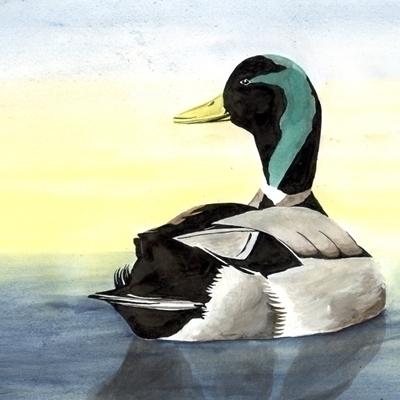 duck, watercolour, lake, blue - robincottage | ello