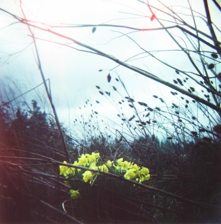 Daffodil Gloom - emilyweeks   ello