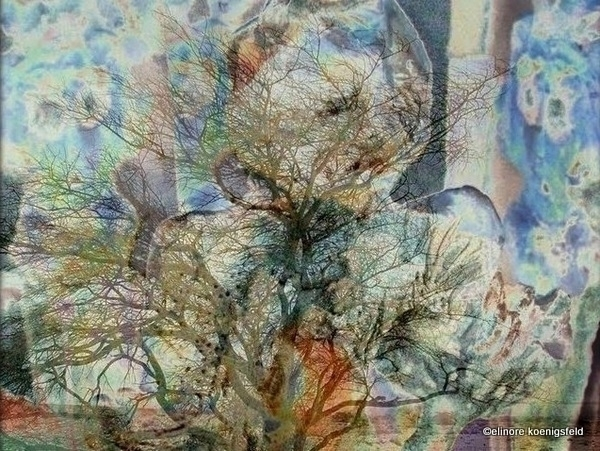 Human Tree - fineart, woman, tree - elinorekoenigsfeld | ello