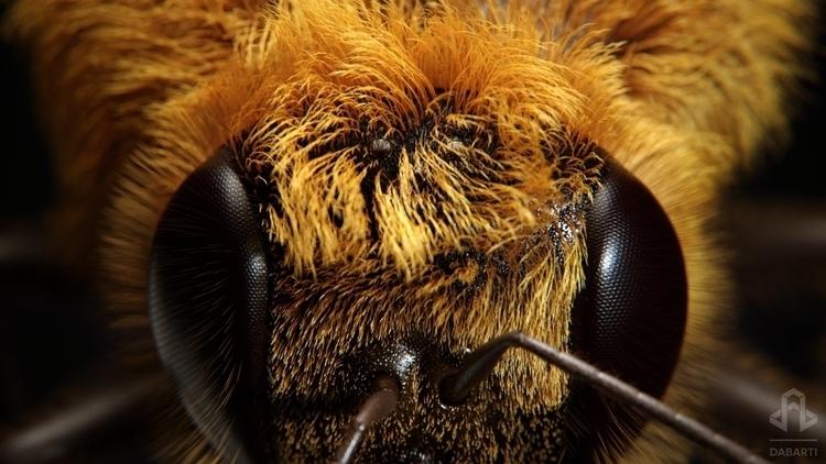 Bee - 3dsmax, 3d, vray, Cuda, bee - wyszolmirski   ello