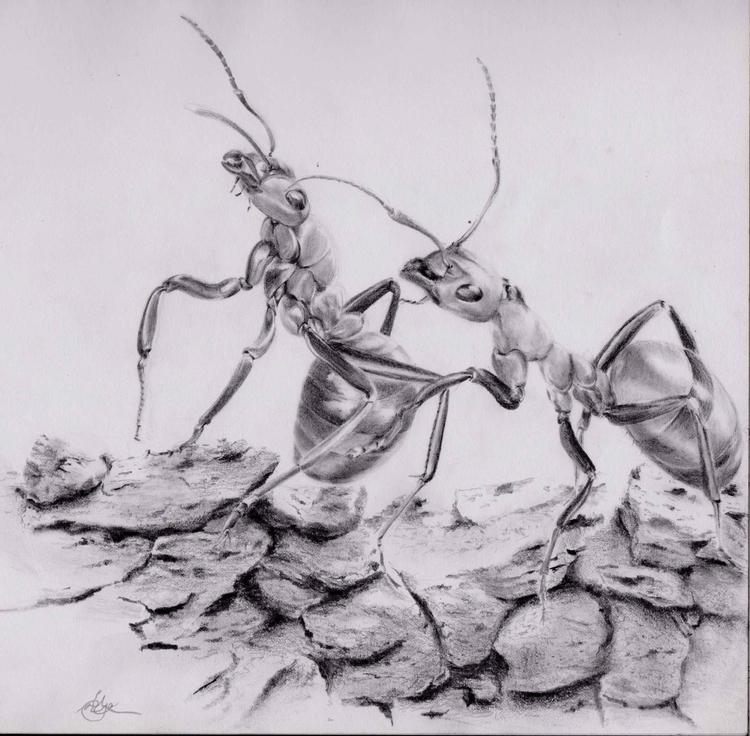 graphite pencils - illustration - emilygrobler | ello