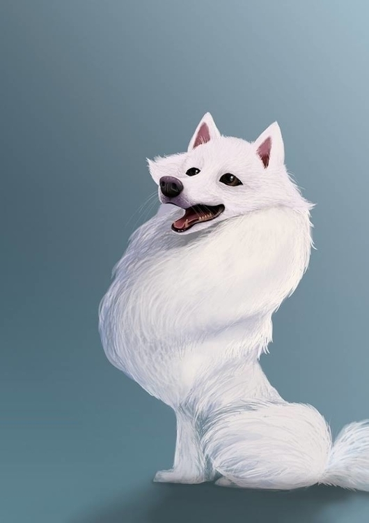 American Eskimo - Snow Ball - AmericanEskimo - limwangwei | ello