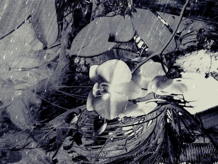 Gravity Flowers - digitalart, GravityonFlowers - schuzannamidnight | ello