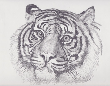 'Tiger - drawing - brandyhouse | ello
