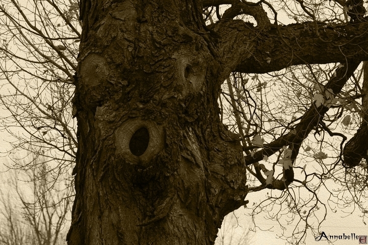 Friend - photography, hauntedtree - annabelle-1108 | ello