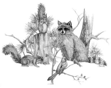 'Raccoon Friends - drawing - brandyhouse | ello