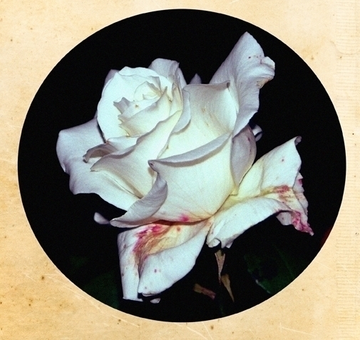 Sleepflower white - jenniferreid-1004 | ello