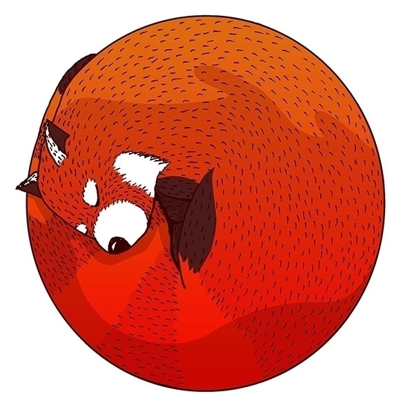 Red panda - drawing, illustration - bananabits | ello