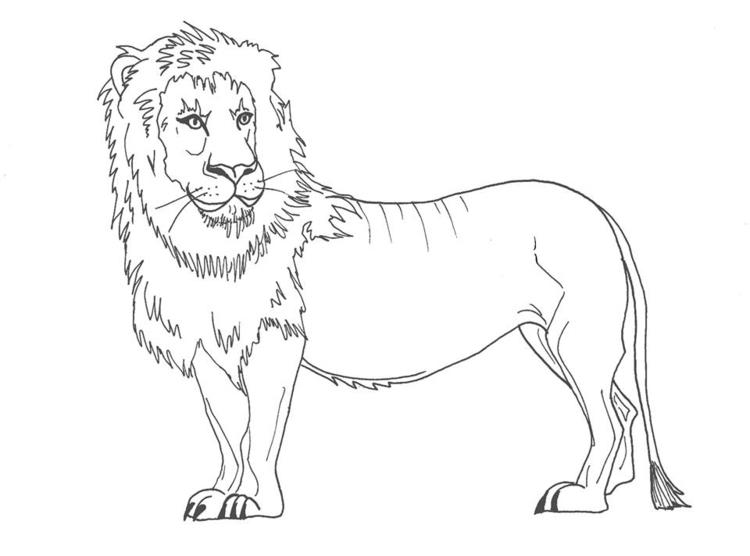 illustration, drawing, lion, animalillustration - elf-1123 | ello