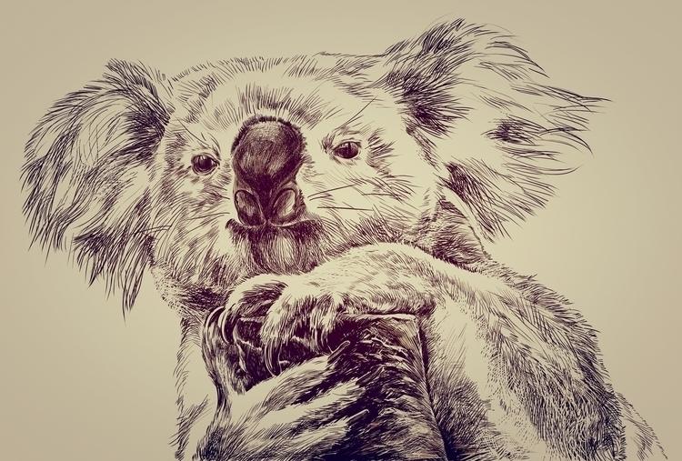 Koala - drawing - usumasinta   ello