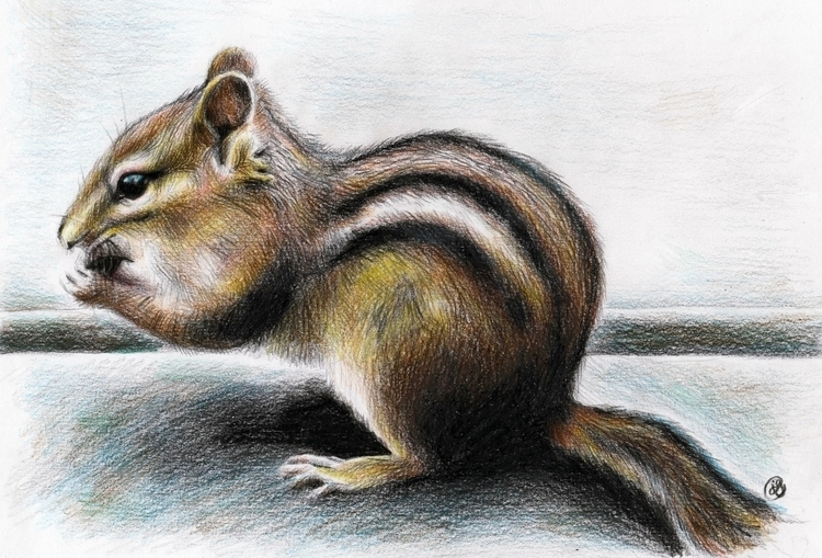 Chipmunk Coloured Pencil - juliagurevich | ello