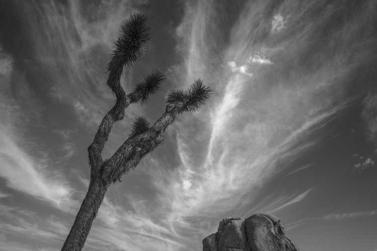 Joshua peak - joshuatreenationalpark - frankfosterphotography | ello