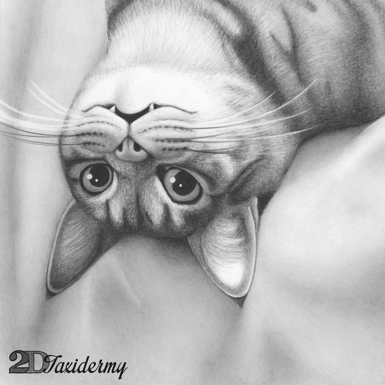 Myrtle AKA Terd - cat, pencildrawing - 2dtaxidermy | ello