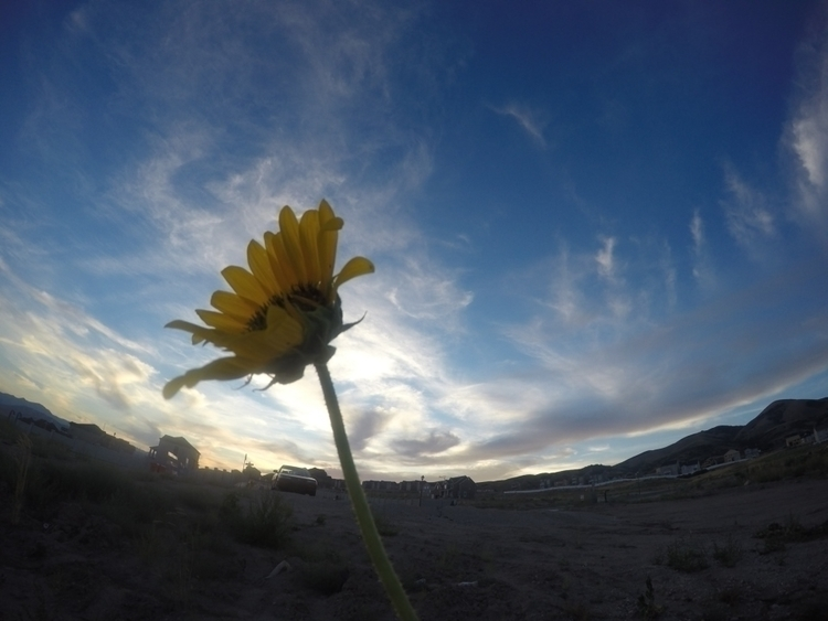 Test flower - karin-1115 | ello