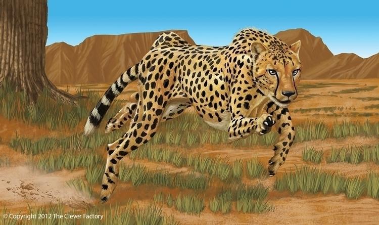 Cheetah illustration Clever Fac - kerseygraphics | ello