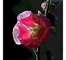 graphic art red blossom hollyho - leo_brix   ello