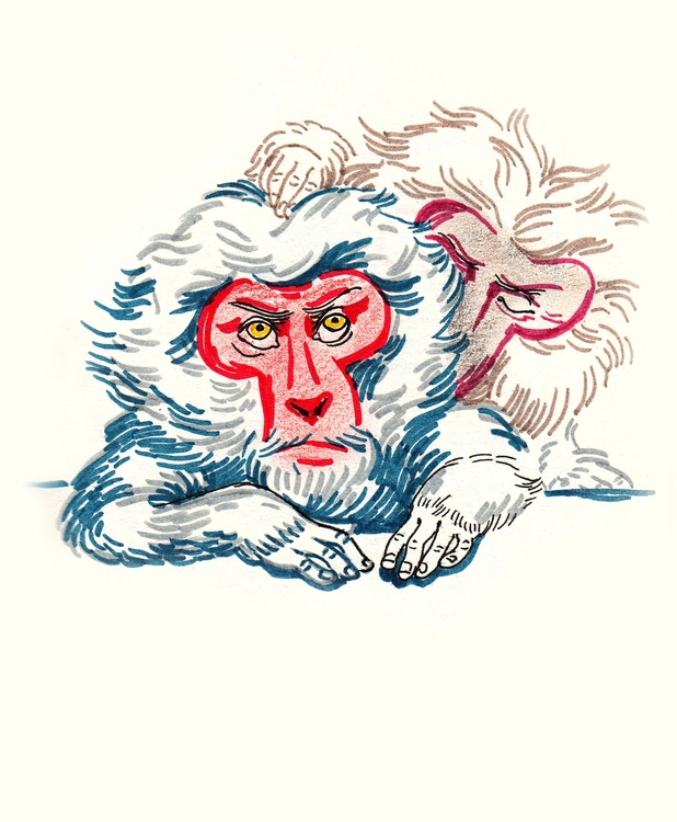 monkey, illustration, drawing - anelia | ello