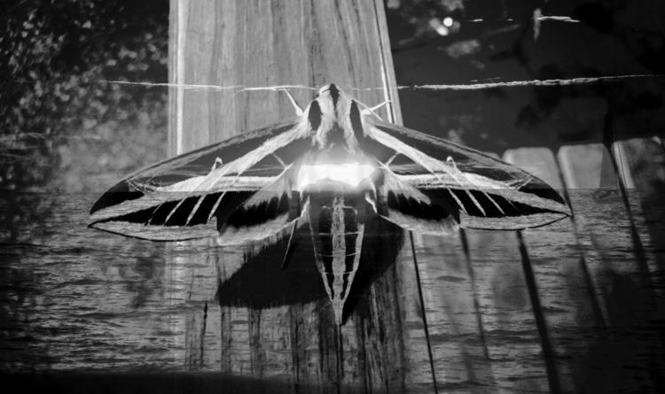 la palomilla del ocaso - photography - xochikalli   ello
