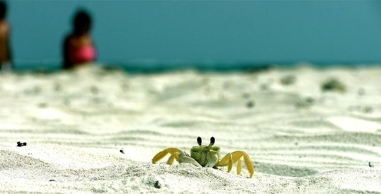 Amigo Cangrejito - animals, crab - stefanolazzaro | ello