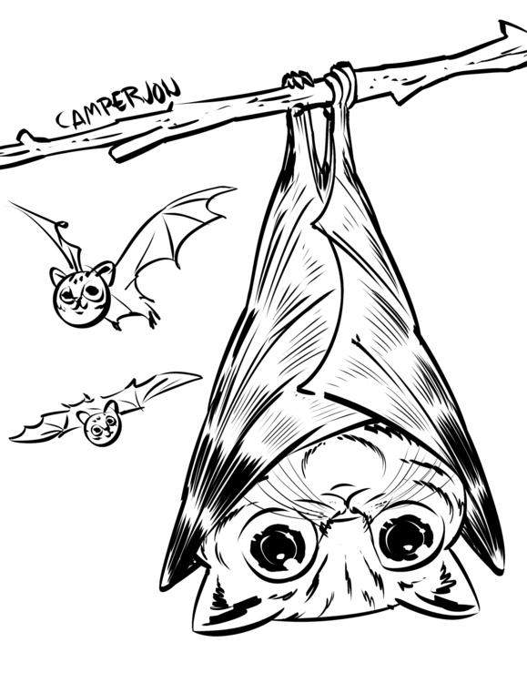 Kitty Bat - drawing, cartooning - camperjon | ello